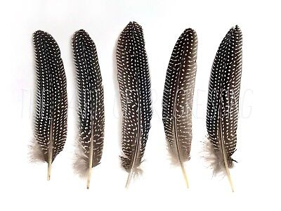 Natural Spotted Guinea Fowl Wing Feathers - Black Grey White Spotted 15-20cm UK