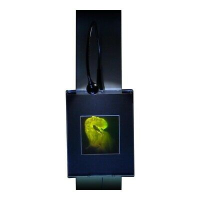 3D T-Rex Large 2-Channel Hologram Picture LIGHTED WALL MOUNT, Photopolymer Type