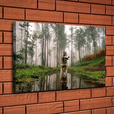 "12""x18""Dog Reflection In The Woods Home Decor HD Canvas Print Wall Art Painting"