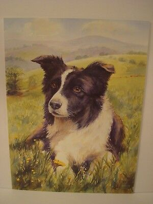 "Border Collie Head Study Print By B.A. Crosby 16""x12"" in Color"