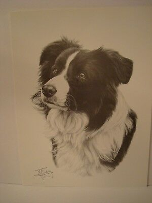 "Border Collie Head Study Print By M.J. Sibley 16""x12"" Black and White"