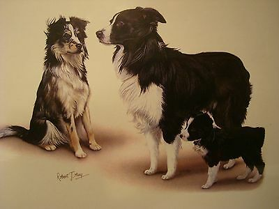 "3 Border Collie Print By Artist Robert May 8""x10"""