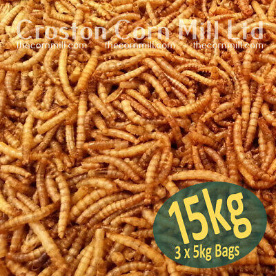 15kg (3x5kg) Wild Bird Dried Mealworms *Premium Grade* Poultry Chicken Hedgehog