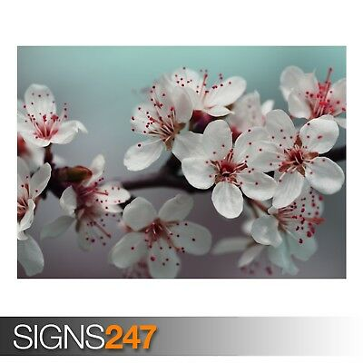 Poster Print Art A1 A2 A3 AD990 NATURE POSTER WASHINGTON DC CHERRY BLOSSOM