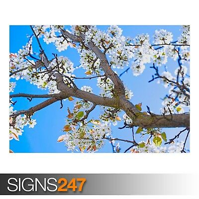 AD929 Photo Poster Print Art * All Sizes NATURE POSTER MOST BEAUTIFUL SPRING