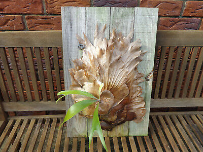 Staghorn / Elkhorn Fern on Wooden Base Board  (#3)