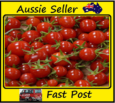 Tomato Seeds Red Cherry Tomato Easy Grow Vegetables Home Garden 100 Seed Lots