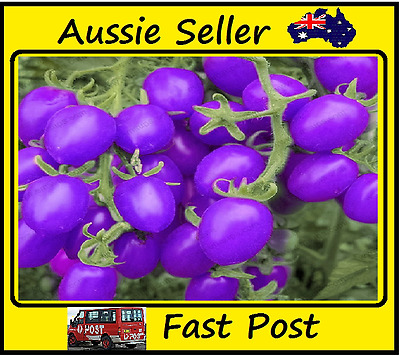 Tomato Seeds Purple Cherry Tomato Easy Grow Vegetables Home Garden 100 Seed Lots