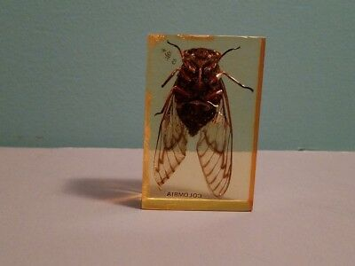 Vintage Bug in acrylic casing from Columbia