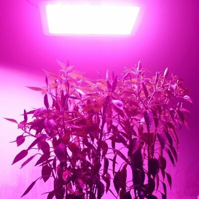 1200W 600W LED Grow Light Panel Lamp for Hydroponic Plant Growing Full Spectrum