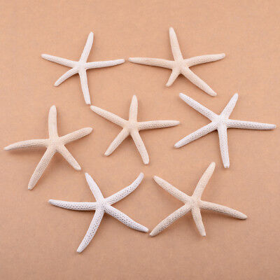 12pcs 5-10cm Sea Star Natural White Pencil Finger Starfish Wedding Decoration