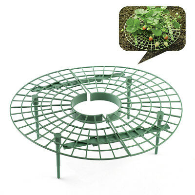 Strawberry Supports Keeping Fruit Elevated to Avoid Ground Rot Cage Stand 4 Legs