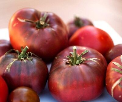 USA HEIRLOOM Organic Cherokee Purple Tomato 25-200 seeds