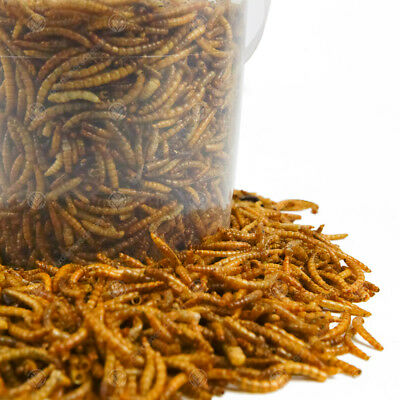 Dried Mealworms Mix - High Quality Wild Bird Food Large Variety