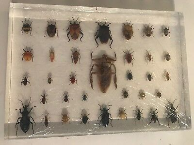35 Insects Set In Acrylic Block Education Real Speciment New