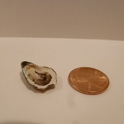 Miniature Large Oyster