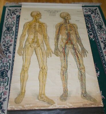 Large Antique Medical 1918 American Frohse Anatomical Chart Circulatory System