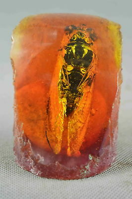 Collectable Handwork Decor old Amber Inner Inlay Cicada Exorcism Souvenir Statue