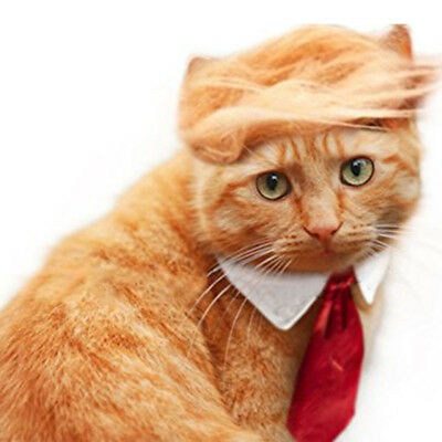 Pet Dog Cat Trump Style Cat Wig Pet hair Costume Head Wear Apparel Toy for Chris