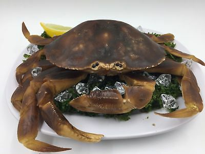 Fake Plastic WHOLE LIVE CRAB Replica Seafood Imitation Faux Food Grocery Display