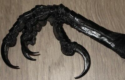 One genuine Icelandic beautiful raven foot,Claw(Common raven)Taxidermy