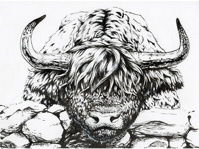 Original Highland Cow Ink Drawing by the Artist!