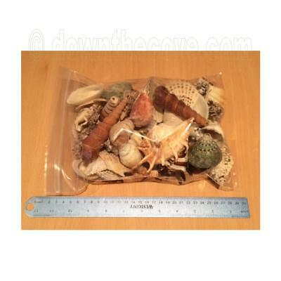 Mixed Bag of Shells 1Kg Medium / Large - Crafts Shell Decoration 1st Class Post