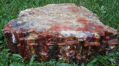 Arizona Rainbow Petrified Wood - Large - For your Garden or Outdoor Living Area