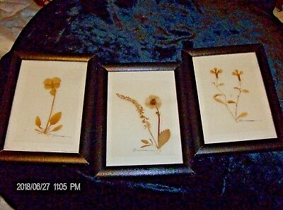 set of three framed signed dried  botanicals 4.25 x 6 inches each
