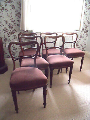 Six 6 Early Victorian Rosewood Balloon Back Dining Chairs