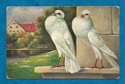 C1910s PC ARTIST DRAWN WHITE FANCY PIGEON / DOVE by ALFRED SCHONIAN