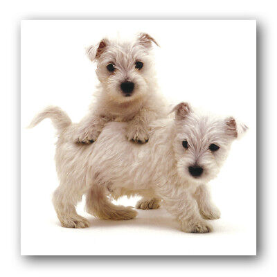 West Highland Terrier Birthday Greetings Card Ref Eb36 Animal