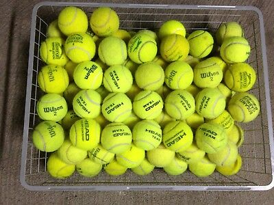 50 Tennis Balls for Dogs & Park Games - Bit too old for tennis court