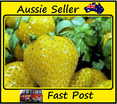Strawberry Seeds Yellow Strawberries Home Garden Easy Grow 300 Seed Lots