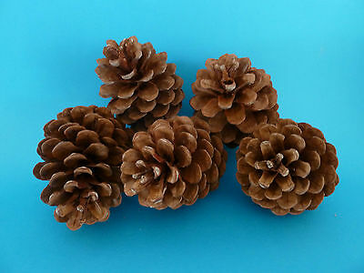 PINE CONES 40 Medium 8cm Great for ART & CRAFT Christmas Pinecone decorations