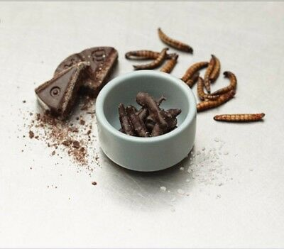 Edible Insects Chocolate Covered Mealworms Food Product Of Australia 🇦🇺