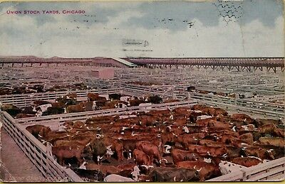 1910 Union Stock Yards Cows Cattle Pens Chicago Illinois IL Postcard B10