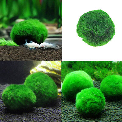 Green Moss Ball Filter Live Aquarium Aquatic Plants Decor Fish Shrimp Tank Pet