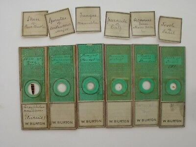 Set of 6 Antique Paper Covered Microscope Slides by Cornelius Poulton.  c1850.