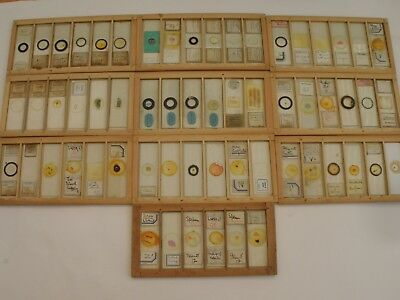 Antique / Vintage Set of 60 Microscope Slides. Insects, Plants, Histology etc.