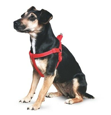 ANCOL padded exercise dog harness ! Red ! XL 88cm - 120cm chest ! NEW !