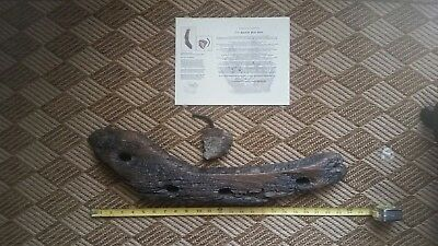 1715 FLEET SHIPWRECK ARTIFACT large and small piece of ship timber with nail.