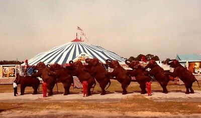 1985 - Clyde Beatty - Cole Bros Circus - Long Mount