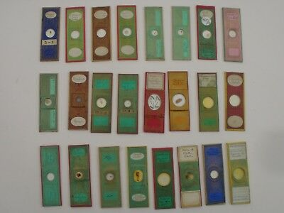 Collection of 24 Antique Paper Microscope Slides