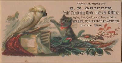 Victorian Trade Card-D N Griffin Clothing-Beverly, MA-Kitten-Cockatoo-Flowers
