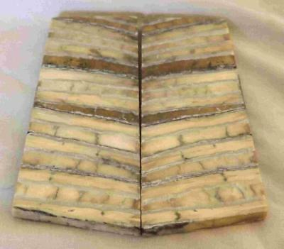 Siberian Mammoth Tooth Scales Stabilized 91 mm x 33 mm x 5 mm #MT19
