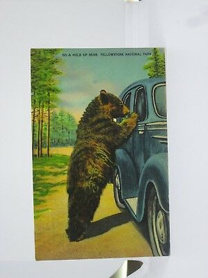 Vintage Postcard of a Bear and Car Window, Yellowstone National Park, Wyoming WY