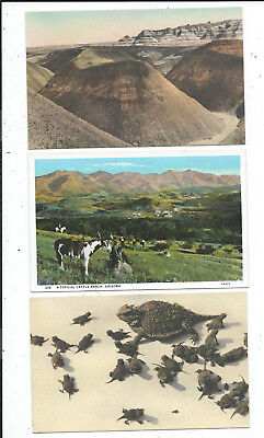 3 Hand Colored Postcards Blue Forest Horned Toads Ranch Adamana AZ Arizona