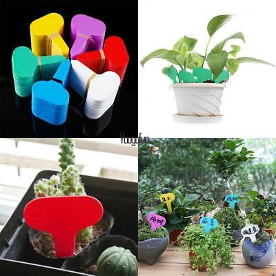 100pcs StylishEasy Plastic Plant Seed Labels Garden Stake Label Tags 5x1cm New