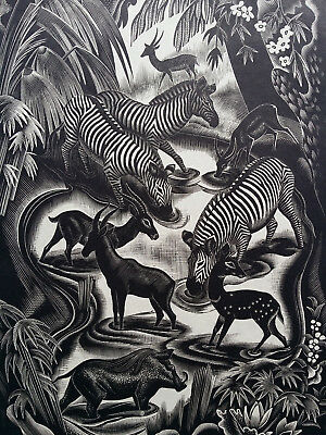Orig Woodcut of Clifford Webb signed/n° Jungle Animals Savage Zebre Hind Boar